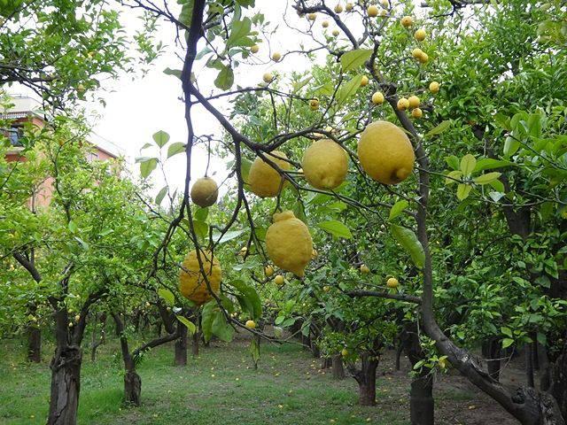Sorrento: Giardini di Cataldo