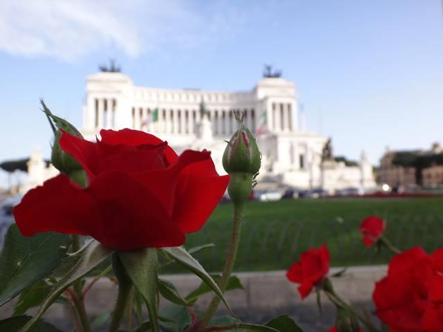 Rosas da Piazza Venezia com o Palácio Vittorio Emanuele ao fundo.