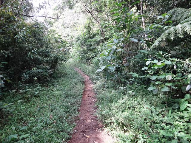 A maior parte da trilha é como nesta imagem.